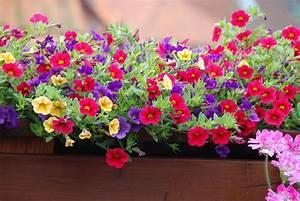 Blumen Für Südbalkon : balkon blume foto bild pflanzen pilze flechten ~ Watch28wear.com Haus und Dekorationen