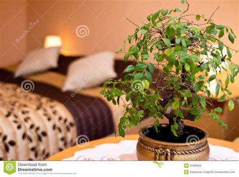 lesbienne dans une chambre plante verte dans une chambre 28 images 5 plantes d