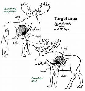 Moose Field Techniques And Game Care
