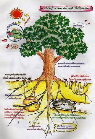 การบริหารการจัดการโดยวิธีทางธรรมชาติ ของระบบการทำเกษตรอินทรีย์ในประเทศไทย: กรรมวิธีต่างๆ ในการ ...