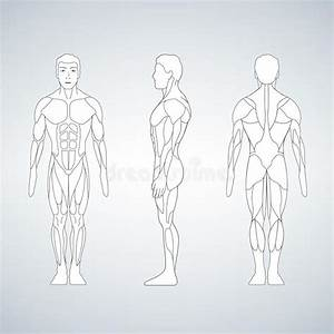 Man Body Anatomy  Front  Back And Side Stock Vector