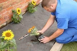 Feutre Sous Gravier : herbe castorama herbe castorama with herbe castorama ~ Premium-room.com Idées de Décoration