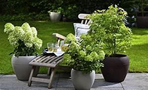 Winterharte Blumen Für Kübel : winterharte geh lze f r die k belbepflanzung gardens bepflanzung topfpflanzen terrasse und ~ A.2002-acura-tl-radio.info Haus und Dekorationen