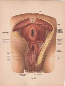 Items Similar To Mature Medical Page Diagram Female Vagina